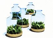 Glass jars with grass on white background.