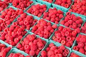 Closeup to raspberries at a market during the day
