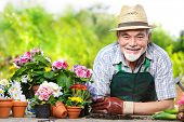 stock photo of pot plant  - Portrait of senior man in the flower garden - JPG