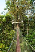 image of gunung  - Canopy walk at gunung mulu national park borneo malaysia - JPG