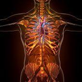 foto of x-rated  - Anatomy of human organs in x - JPG