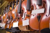 stock photo of violin  - Violins are hanging on the wall in the shop - JPG