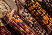 Indian corn cobbs