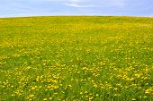 stock photo of bavaria  - wide panorama landscape in Bavaria Germany with flowers in meadow at spring - JPG