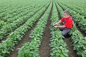 stock photo of soybeans  - Farmer or agronomist examine soybean plant in field using tablet - JPG