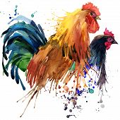 picture of roosters  - Chicken and rooster T - JPG