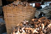 pic of tamarind  - harvest tamarind and collect them in the basket - JPG