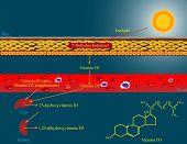 Metabolismo de vitamina D