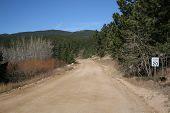 Dirt Road Through Woodlands