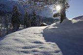 hut and single tree at winter