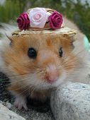 Hamster In Flowered Hat