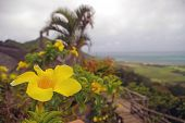 Bright Yellow Flower With Background Of Sea And Mountain