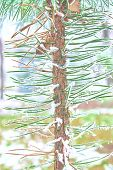 Coniferous Branches Covered With Hoarfrost. Winter Background. Christmas Tree Branch With Hoarfrost  poster