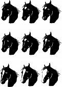 Horse facial markings