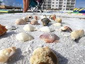 Beach Path Made Of Shells poster