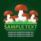 Mushrooms. Vector template