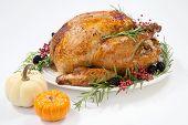 Thanksgiving Turkey On White poster
