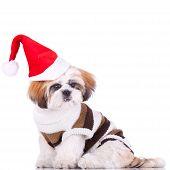 Cute Shih Tzu Santa