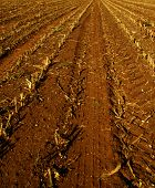 stock photo of biogas  - a nice corn field acre after the harvest - JPG