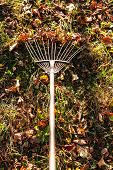Removing The Fallen Leaves Illuminated By Sun On Backyard With Garden Rake In Autumn Evening poster