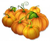 illustration of a bunch of yellow pumpkins