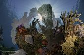 North Americas Coral Reefs