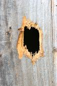Hole In A Wood Plank