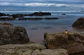 Rocky Shore And Ships