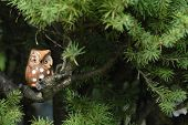 stock photo of screech-owl  - ceramic owl on the branch of a fir tree with copyspace - JPG