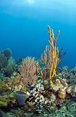 Coral Reef Yellow Rope Sponge