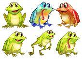 Ilustración de las seis ranas diferentes sobre un fondo blanco