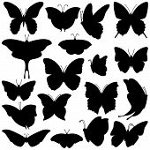 stock photo of species  - Vector Set of Butterfly Silhouettes and Profiles - JPG