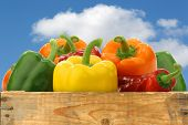 colorful mix of bell peppers (capsicum) against a blue sky with clouds