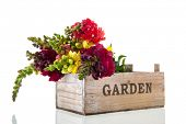 Bouquet dragon flowers in wooden garden crate isolated over white background