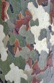 Camo Tree Pattern