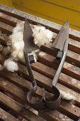 Wool Shears