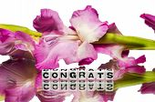 foto of congrats  - Congrats with pink flowers and text message - JPG