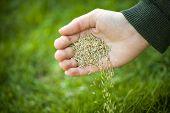 Hand Planting Grass Seeds