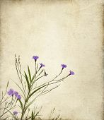 Purple Ruella Flowers Photo Illustration