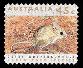 AUSTRALIA - CIRCA 1992: a stamp printed in the Australia shows Dusky Hopping Mouse, Notomys Fuscus,