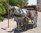 pic of workhorses  - Horse drawing fun ride cart in San Antonio Texas - JPG