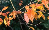 Discolored And Weathered Leaves In Autumn Sunlight