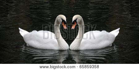 The couple of swans with their necks form a heart, Swan symbol of love. Romantic swan during valentine's day. The couple of swans with their necks form a heart.