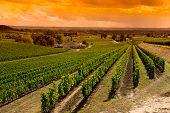 stock photo of paysage  - Vineyard Sunrise - JPG