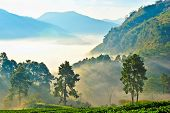 Beautiful Landscape And Fresh Strawberries Farm In Winter At Doi Angkhang Mountain,  Chiangmai : Tha