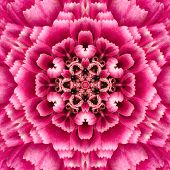 foto of kaleidoscope  - Purple Concentric Chrysanthemum Flower Center Close - JPG