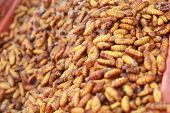 stock photo of silk worm  - fried silk worms in the market - for cooking