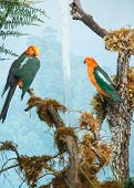 Parrots With Orange Heads