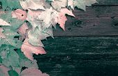 Leaves On Old Wooden Boards - Infrared