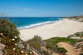 picture of deserted island  - deserted beach in Portugal with plants and flowers - JPG